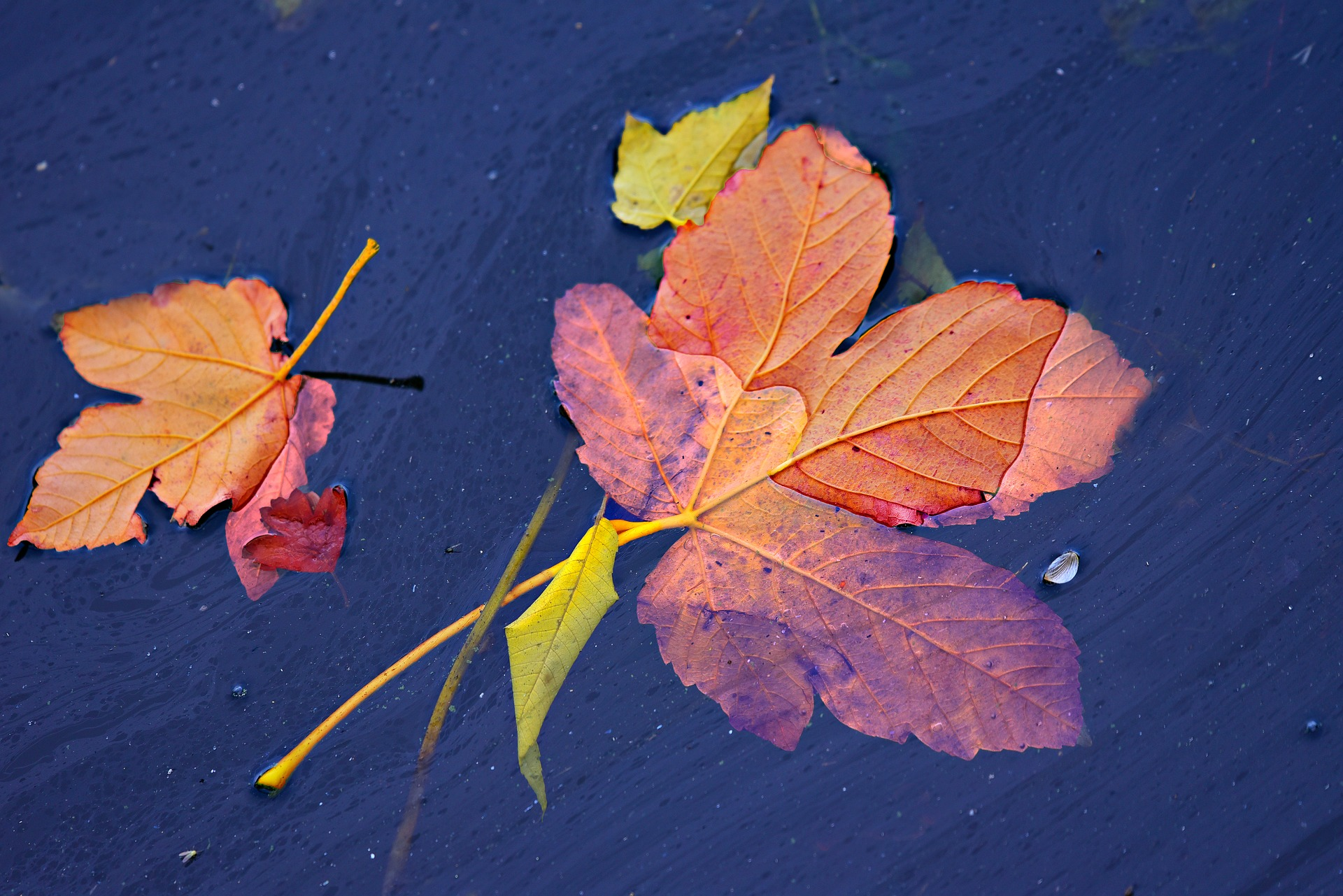 autumn-leaf-3784751_1920.jpg