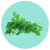 Cilantro & Parsley