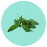 Mediterranean Herb
