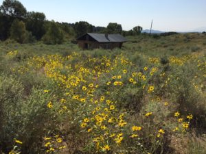 Farisita, CO 81040   $535,000   Farisita Beaver Hut Cattle Ranch   580+ acres · Cattle Ranch · Agriculture · Hunting · Development · Barbwire Fencing · Mountain views · creek bottom ·hills · plains