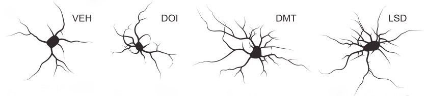 Representations of treated cortical neurons
