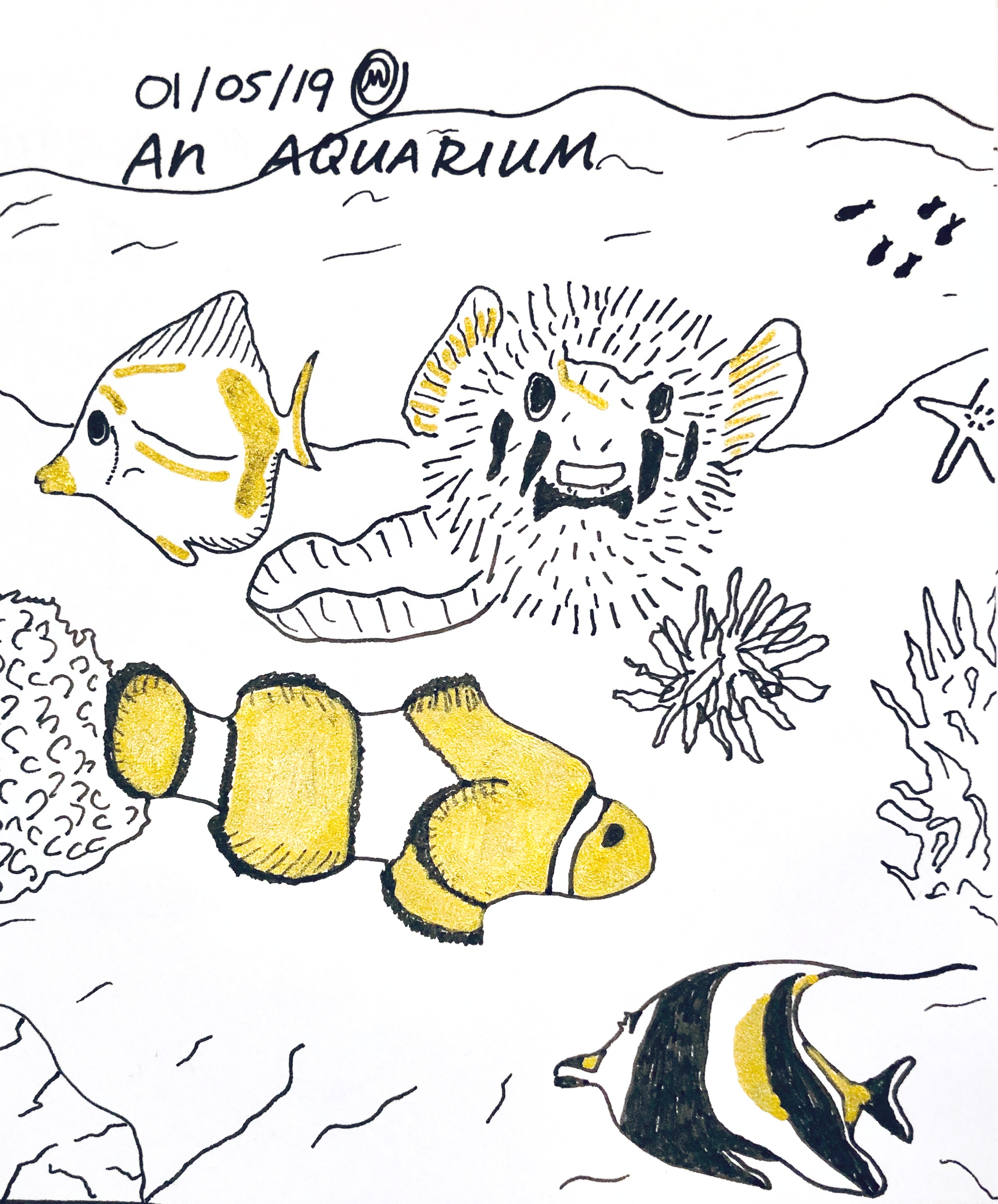 An Aquarium (Salt Water)