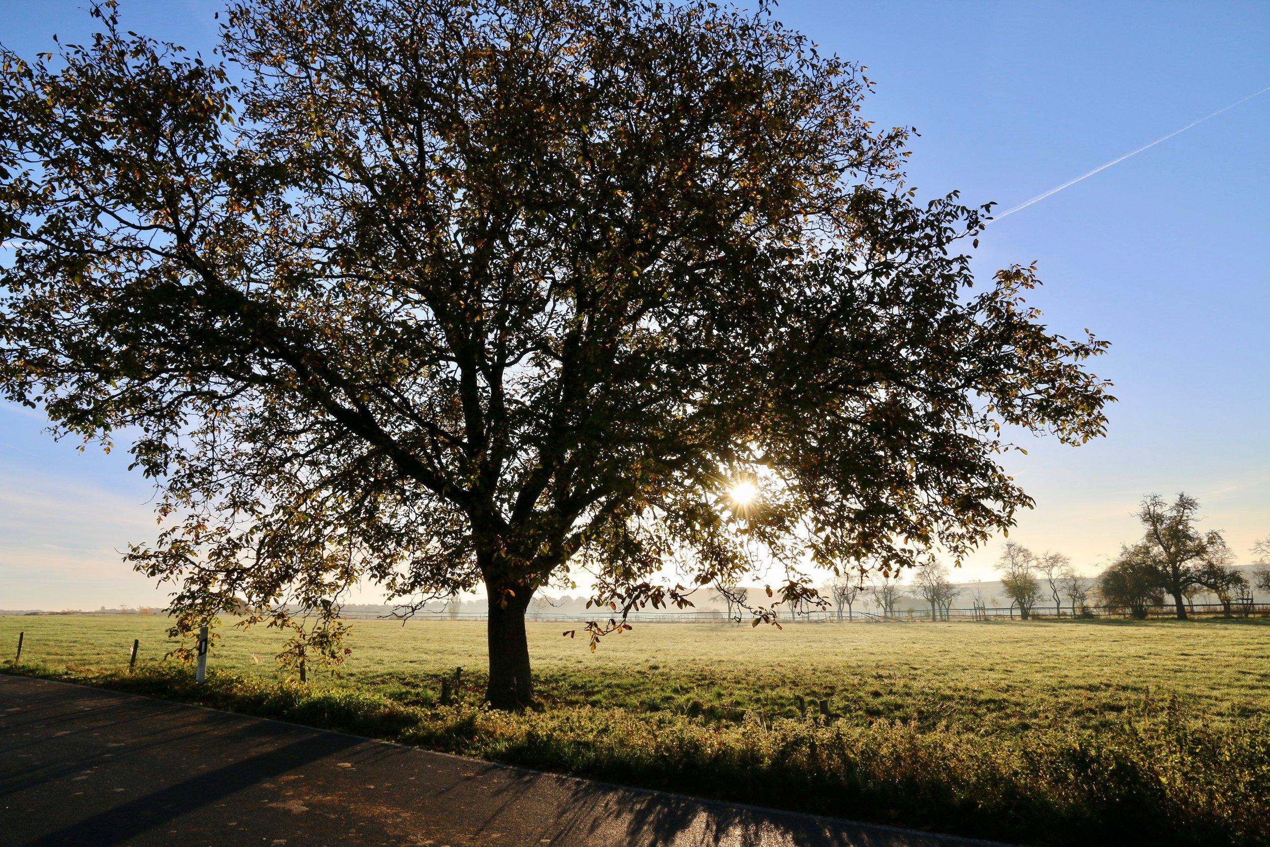 bright-countryside-dawn-218505.jpg