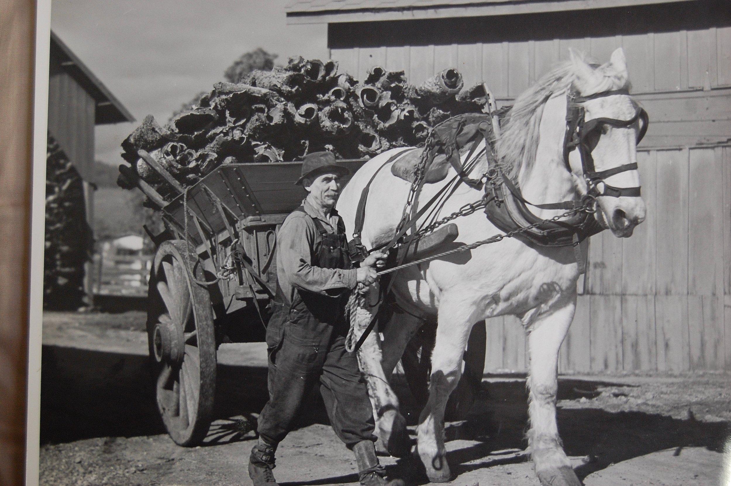 Pop-and-horse.jpg