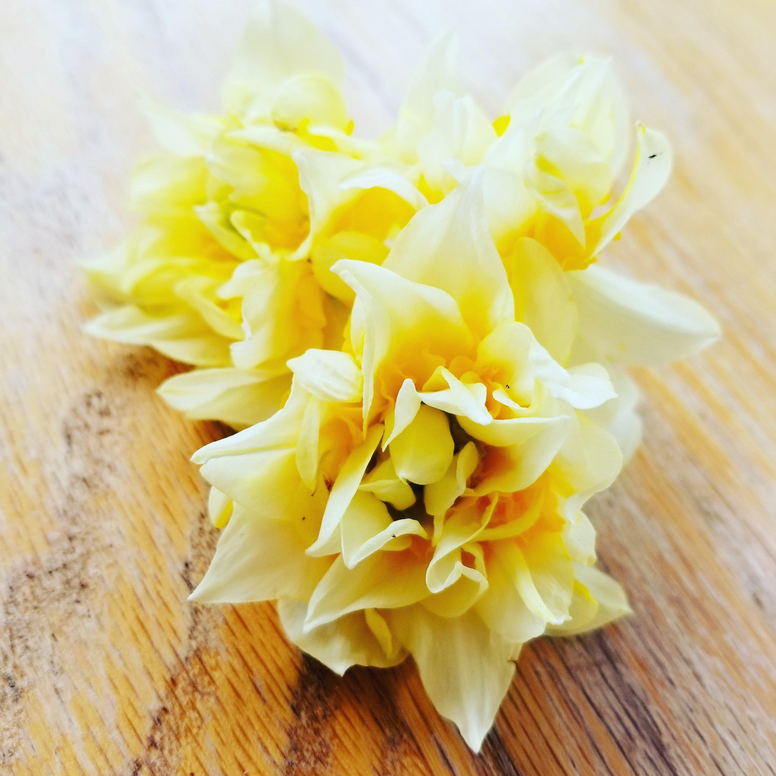 Double Head Daffodils