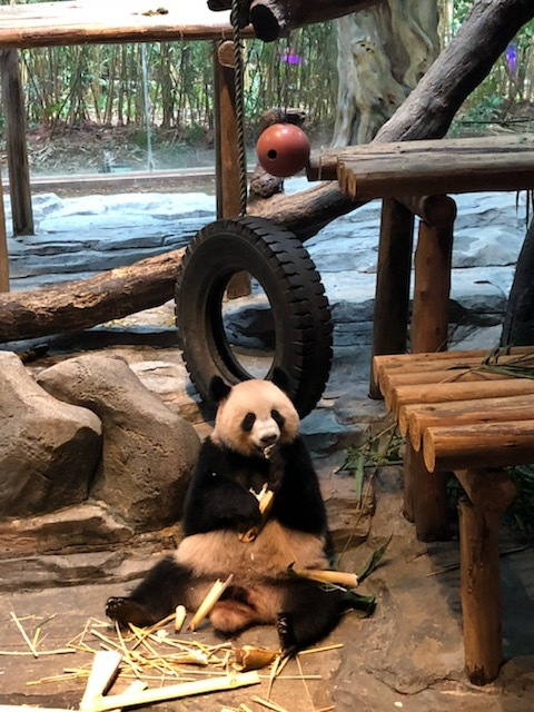 1/3 of the panda triplets.