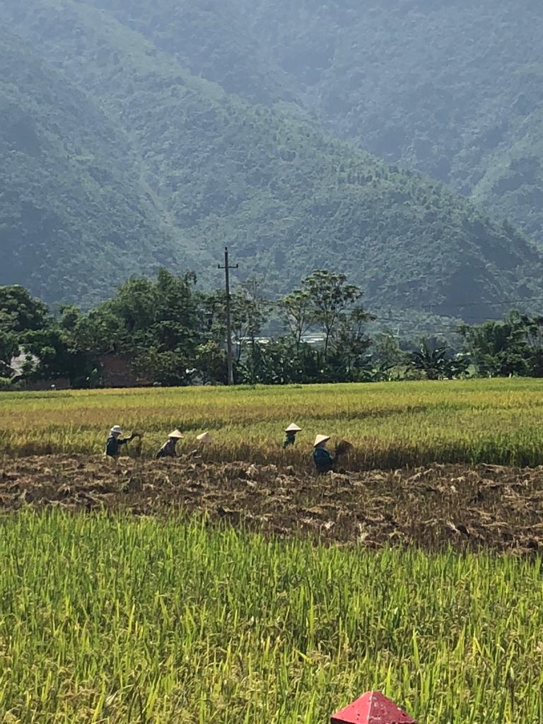 May, September, and October are rice harvesting months.