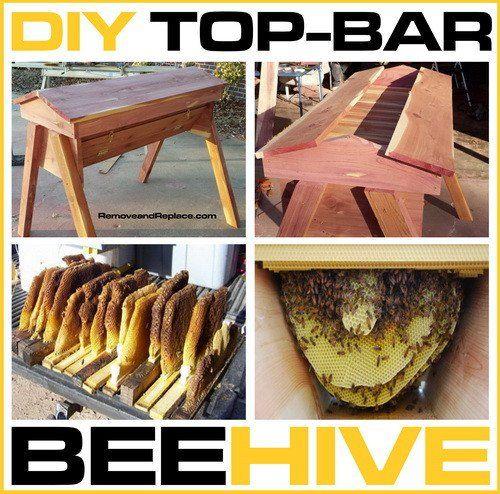 top-bar-hive-4.jpg