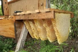 top-bar-hive1.jpeg