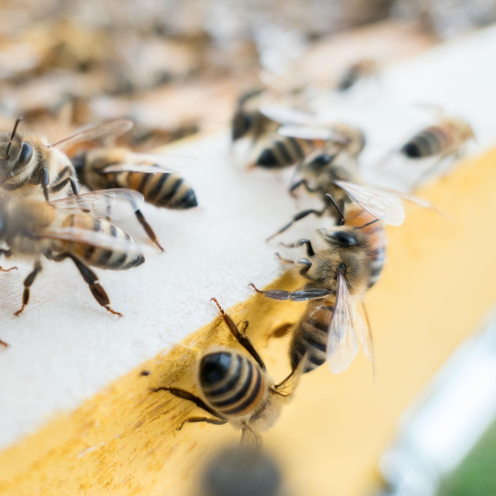 Bee Project Pollinators