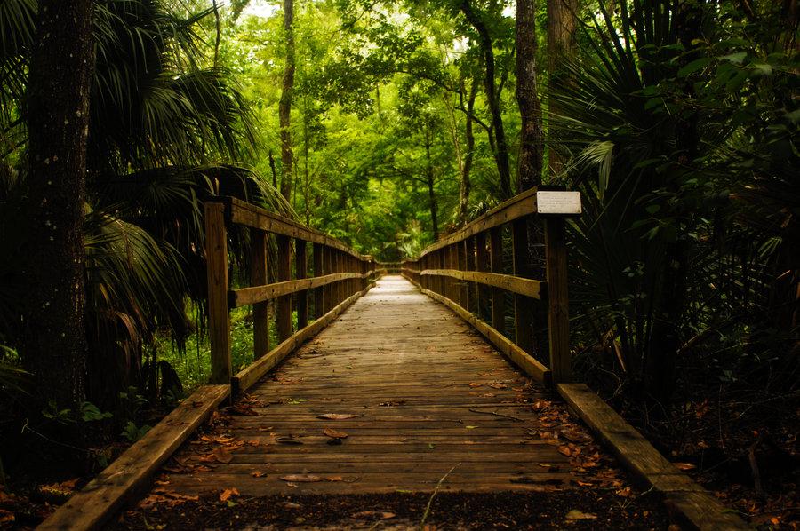 forest_bridge_dark_stock_by_ebstock.jpg
