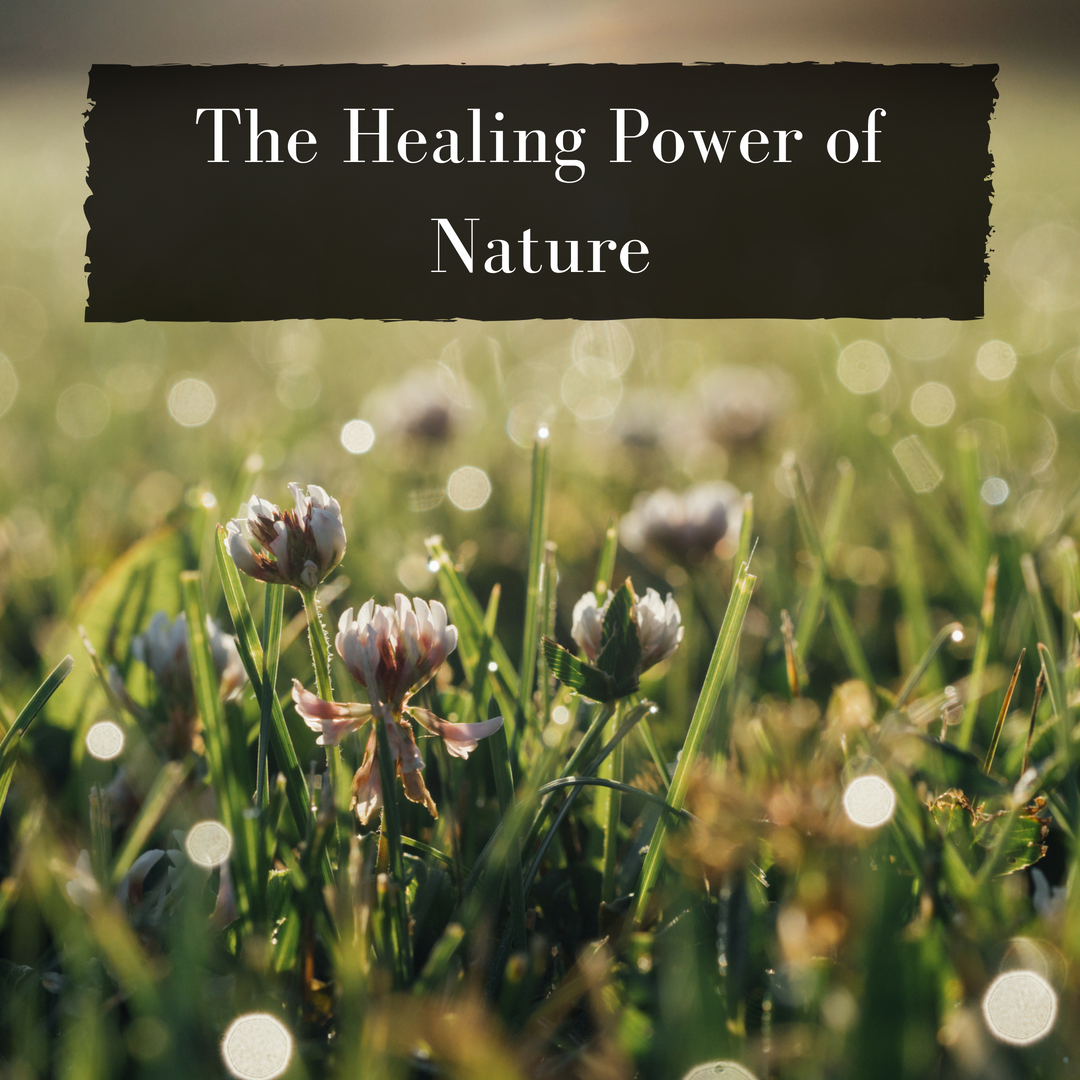The body possesses inherent self-healing processes. We identify and remove any interference with those processes. -