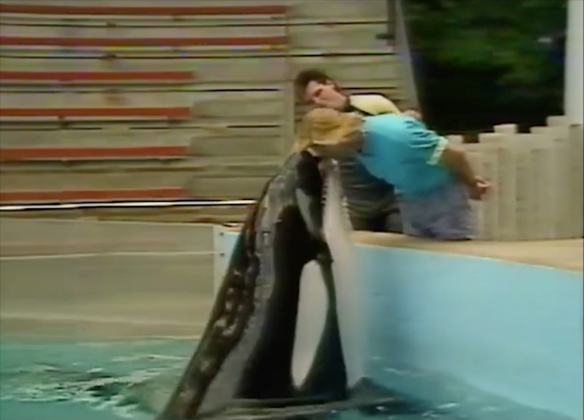 Seconds before a crazed orca whale bit off much of Jim's head in 1991 at Niagara Falls Marineland. Jim has continued working unimpaired ever since.