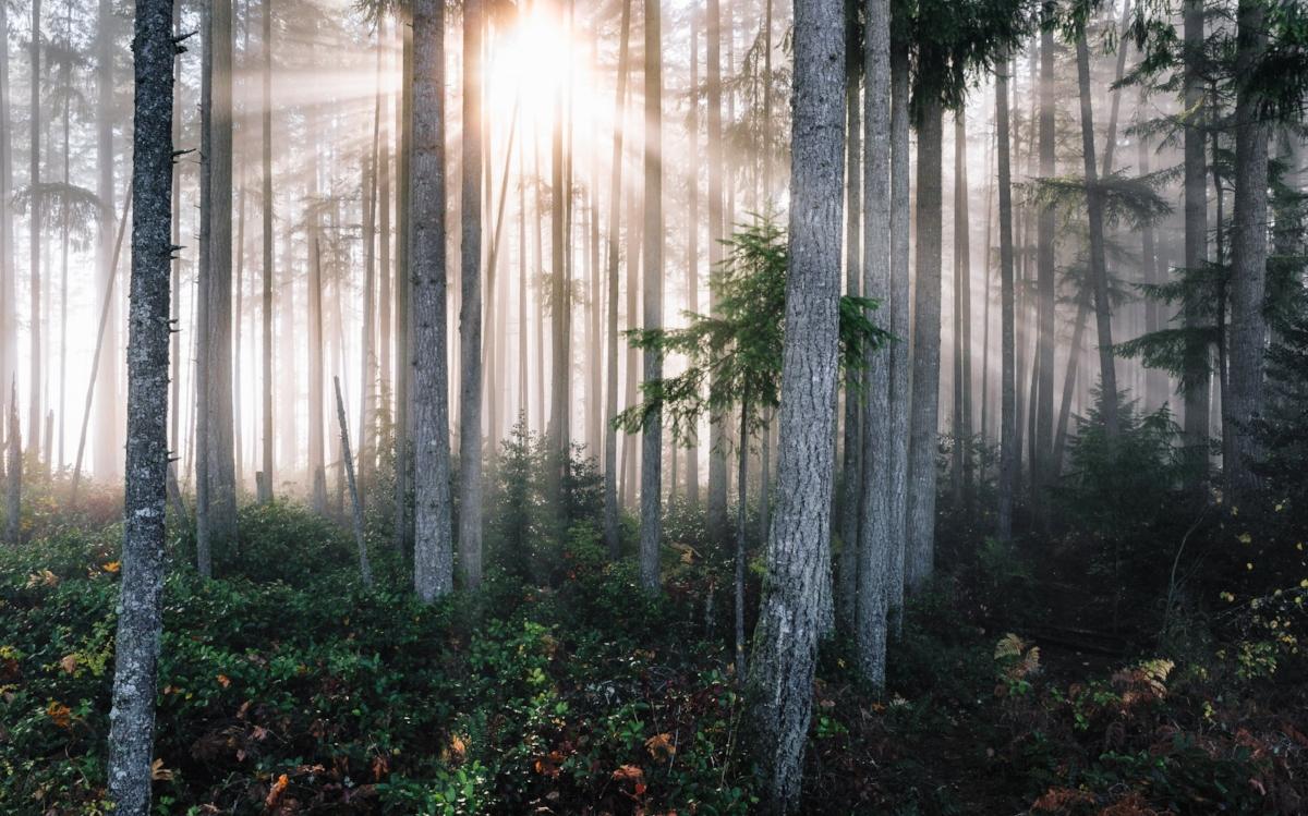 Artedite Healing - Reiki and energy reading