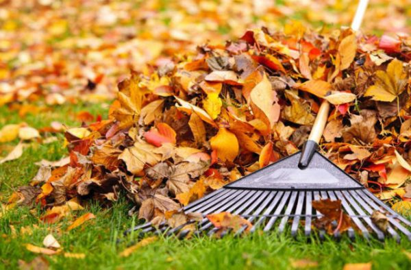 Autumn is a time for cleaning out anything you don't need any longer. Let go and make space!
