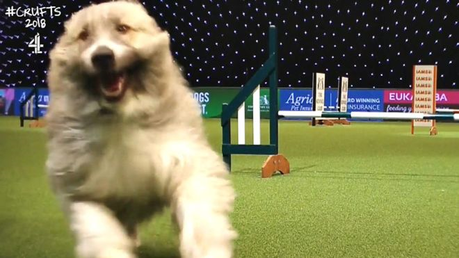Kratu at Crufts, 2018