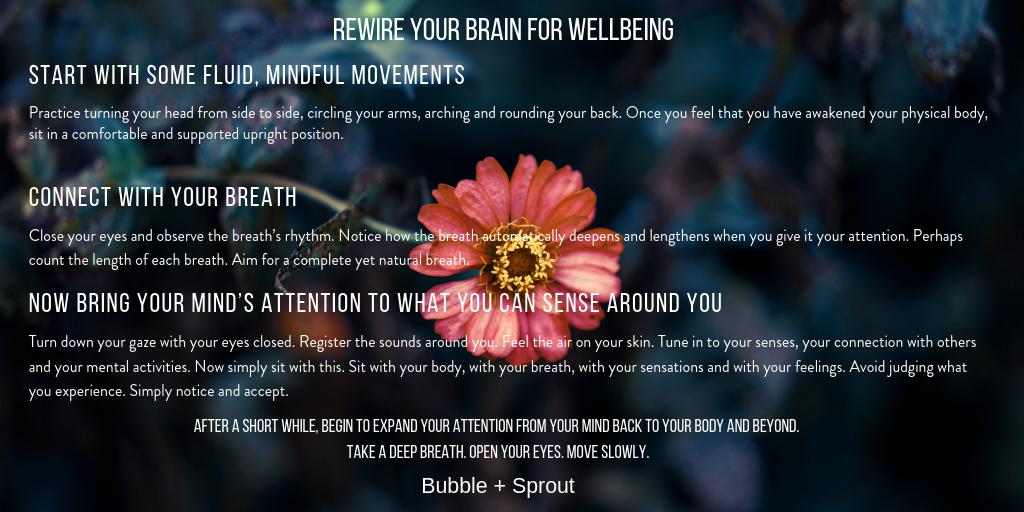 Brain Architect Bubble + Sprout