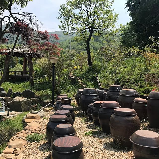 Thanks to @osteonaturecentre for the great trip. Brilliant food and excellent company. #koreanfood #nature #korea #ganghwa #강화도 #countrylife