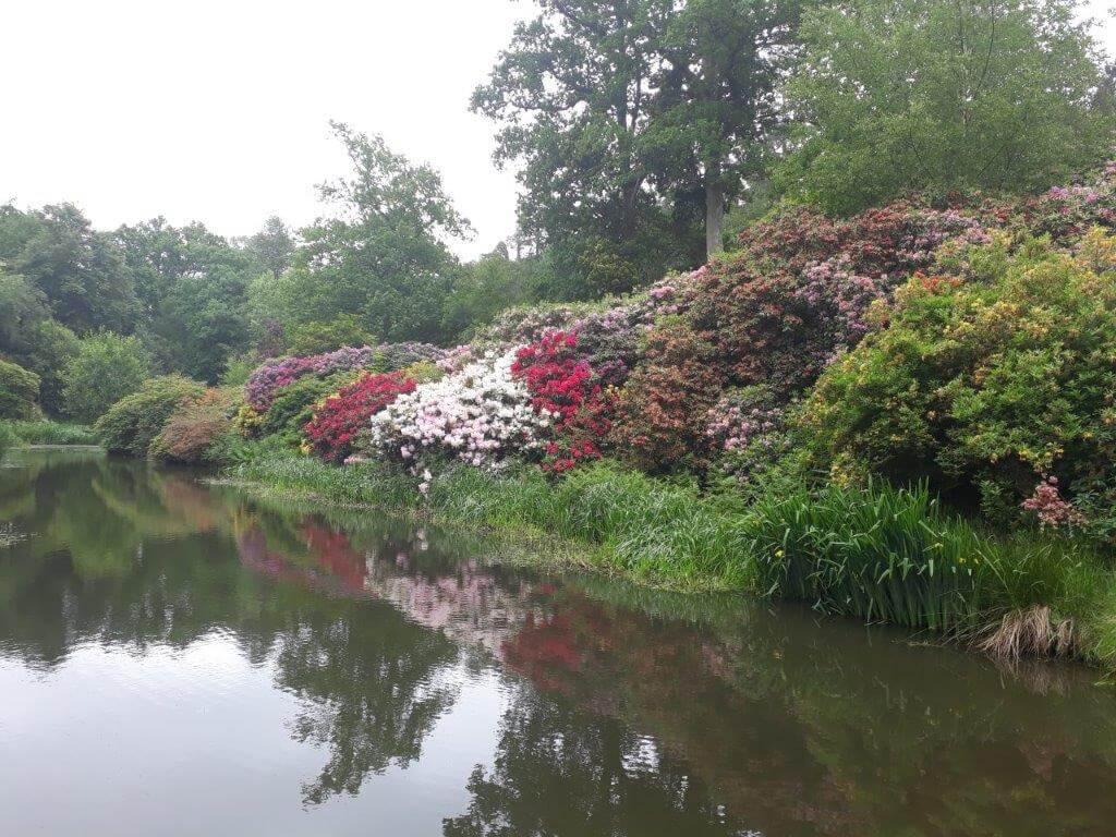 Rhododendron valley 2.jpg