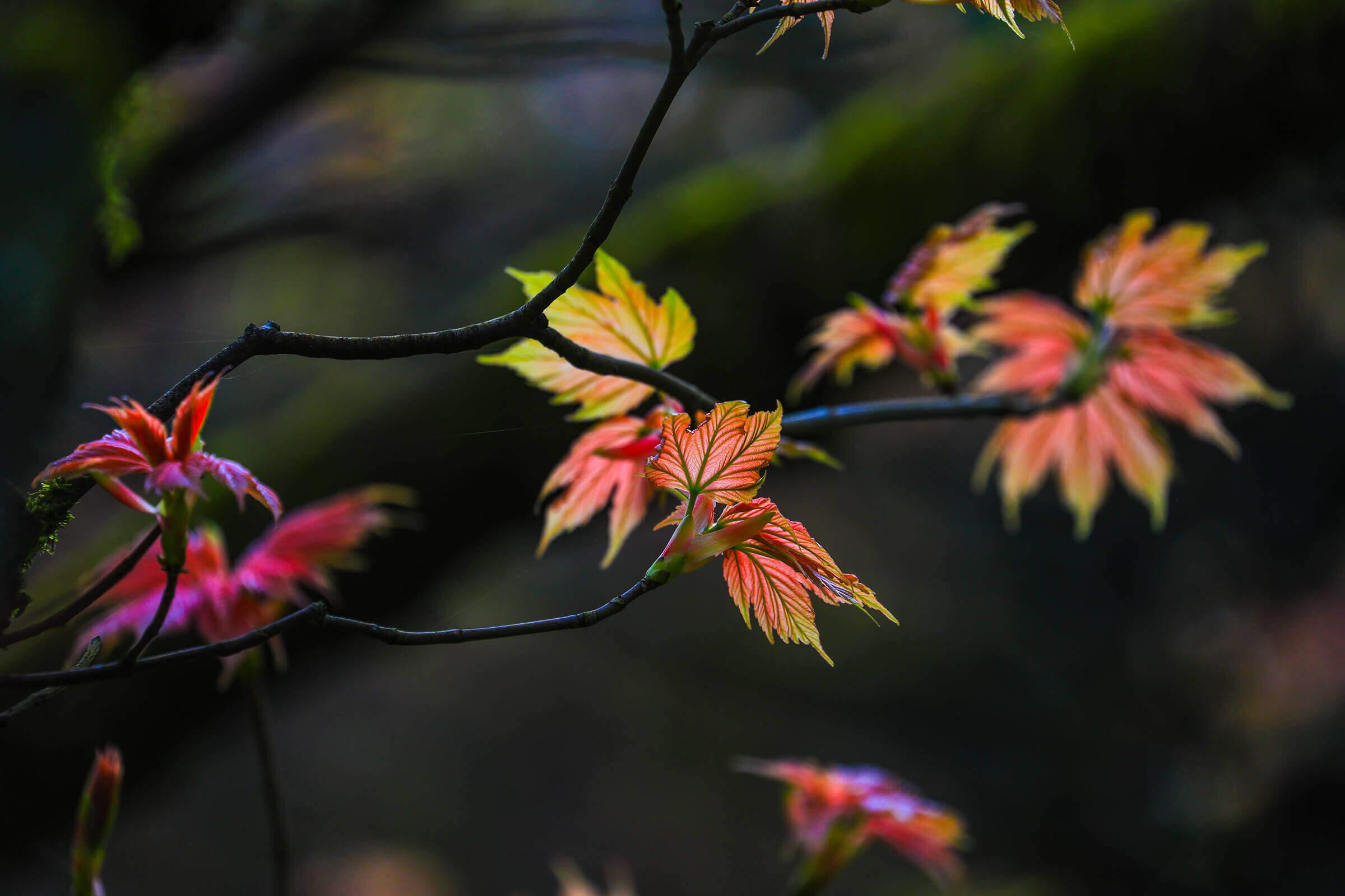 Leonardslee gardens photography.jpg