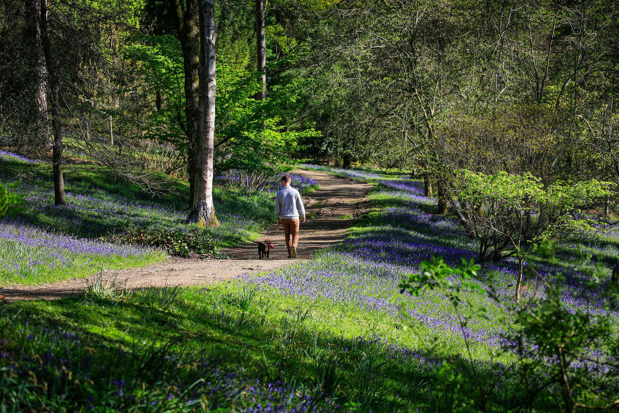 Leonardslee Lakes _ Gardens.jpg
