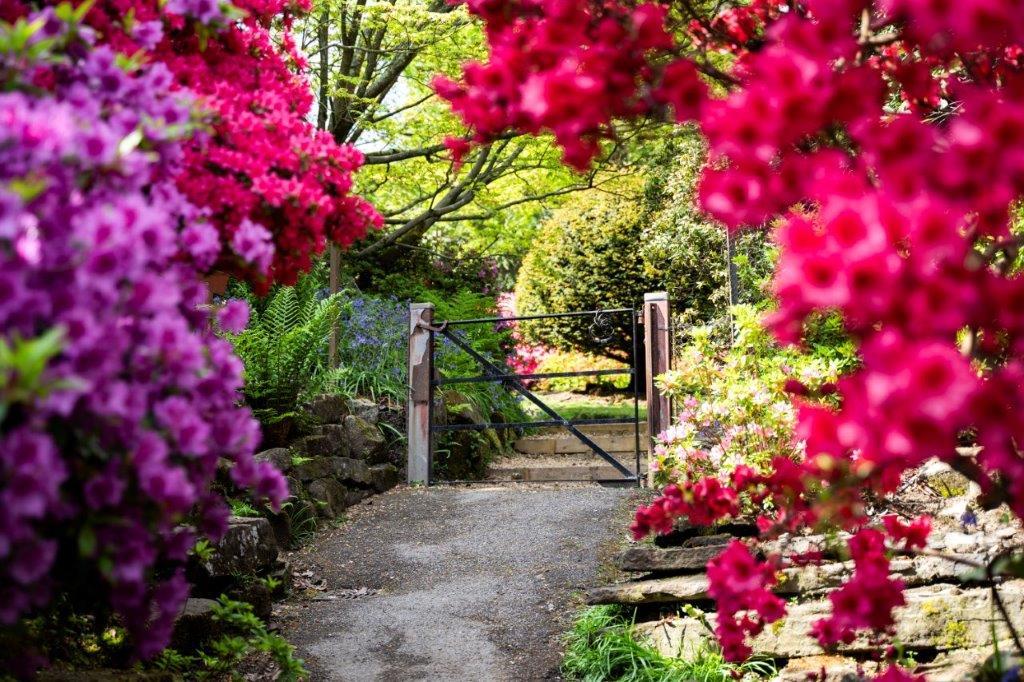 Leonardslee gardens sussex.jpg
