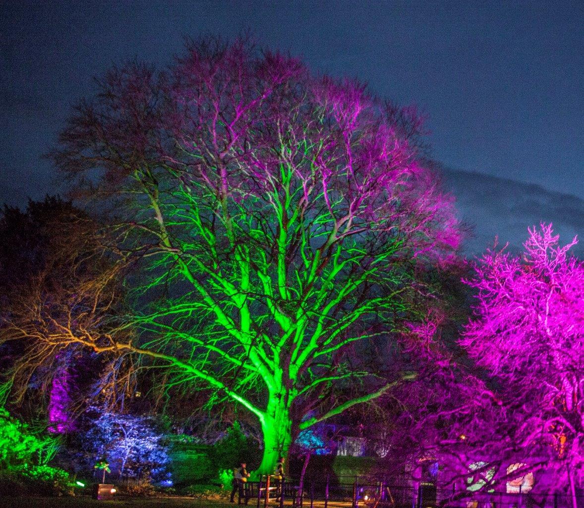 Festive Season Sussex.jpg