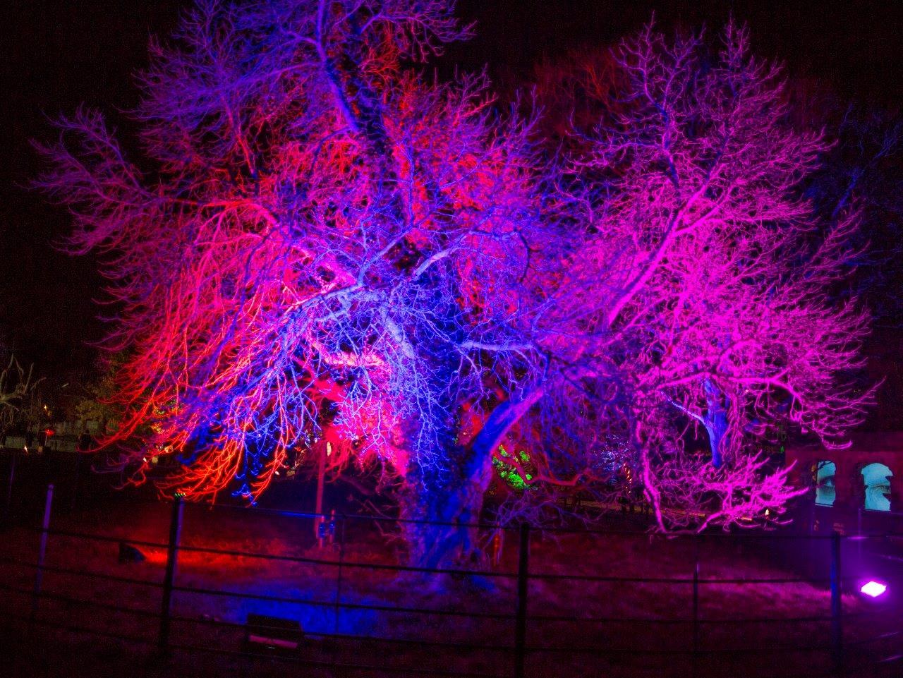 Illuminated wish Christmas.jpg