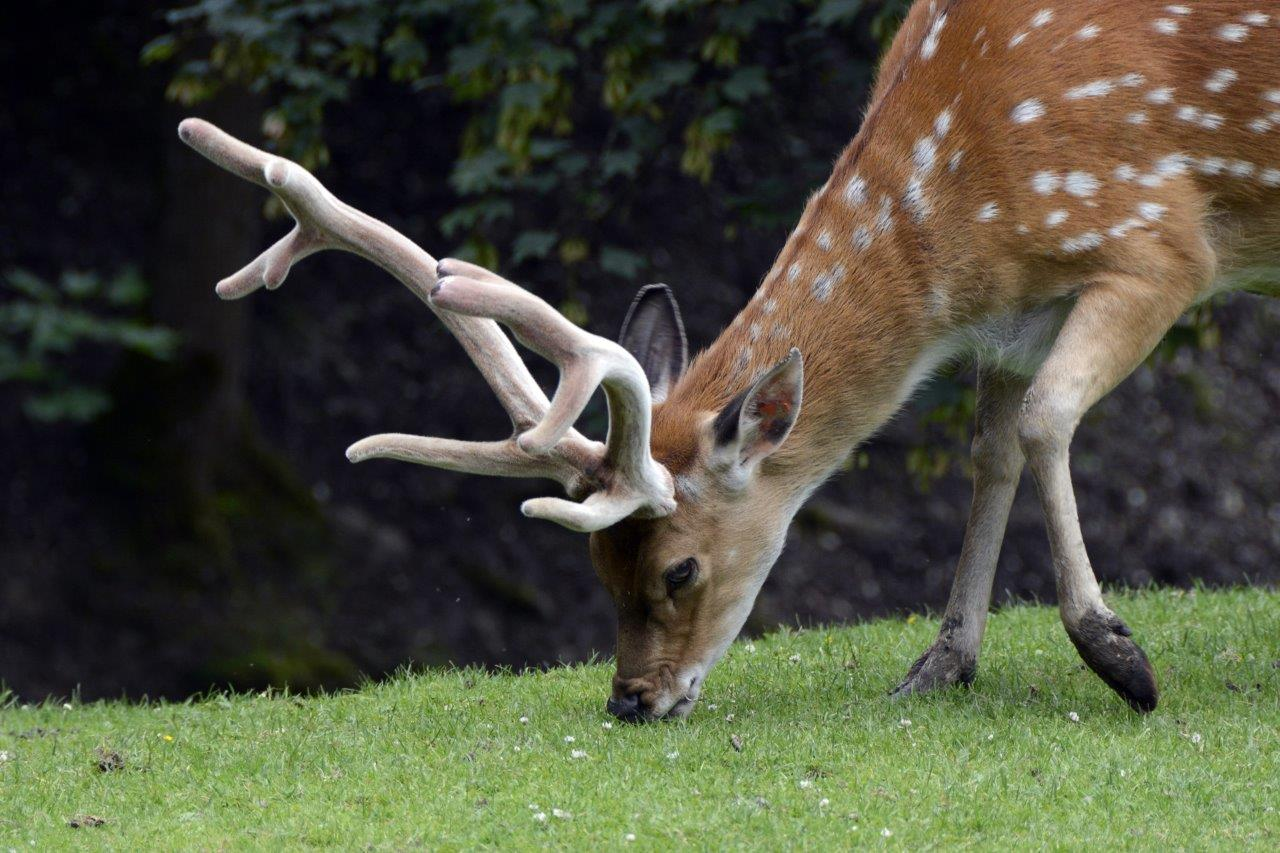 Deer spring gardens Sussex.jpg
