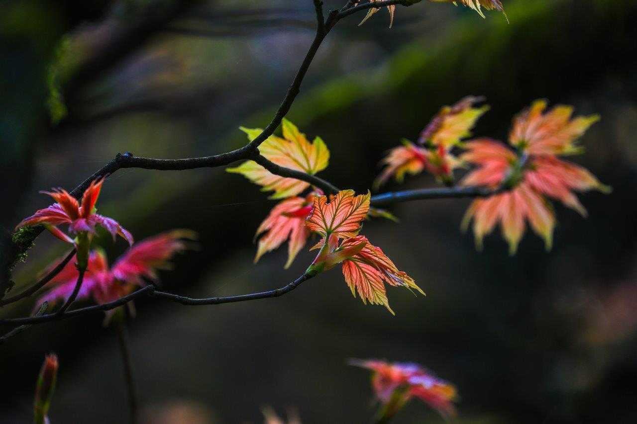 Leonardslee Autumn activities.jpg