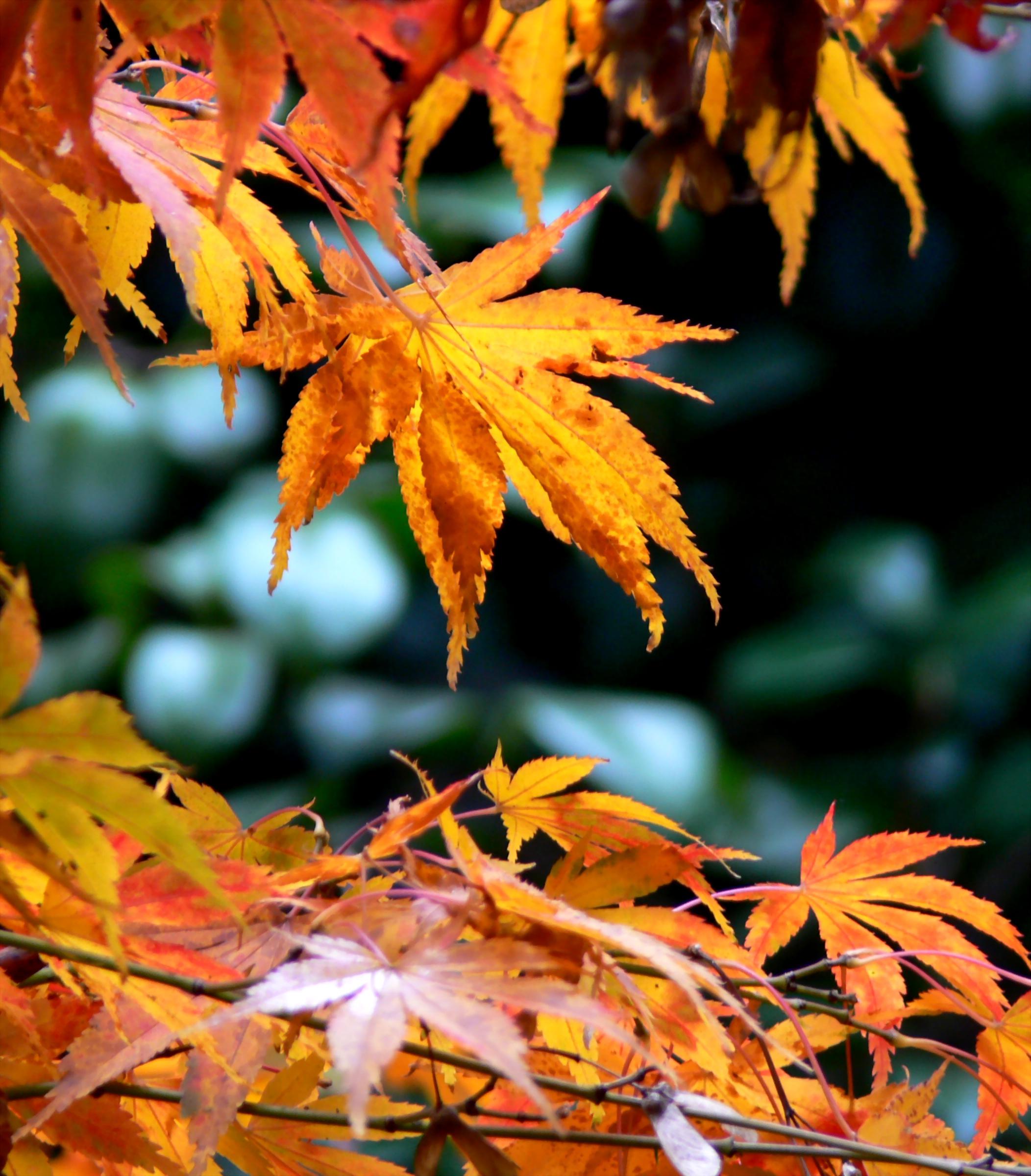 Autumn Leoanrdslee.jpg