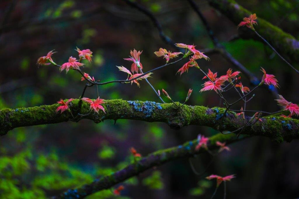 Leonardslee Autumn 1.jpg