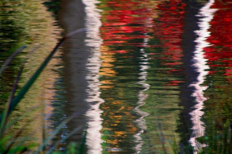 Reflections Autumn Leonardslee.jpg