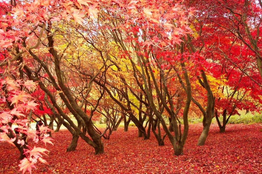 Autumn activities Sussex.jpg