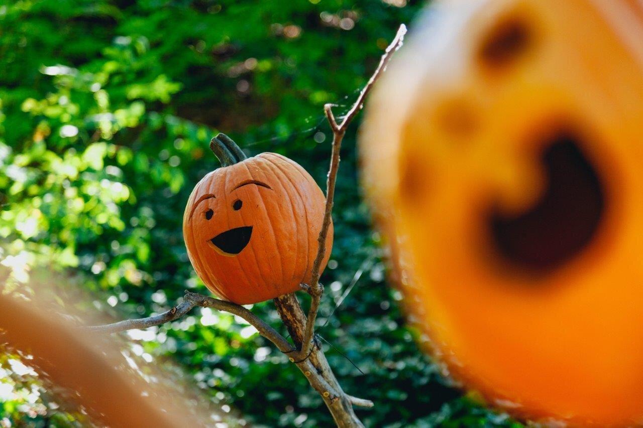 Leonardslee Halloween Autumn.jpg