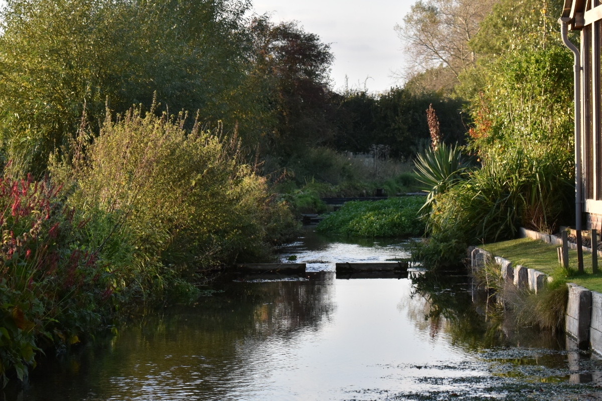 View along the brook with my studio on the right and proected land on the left. Spot the Persicaria on the left - had to crop the photo so not as much visible as I'd have liked!