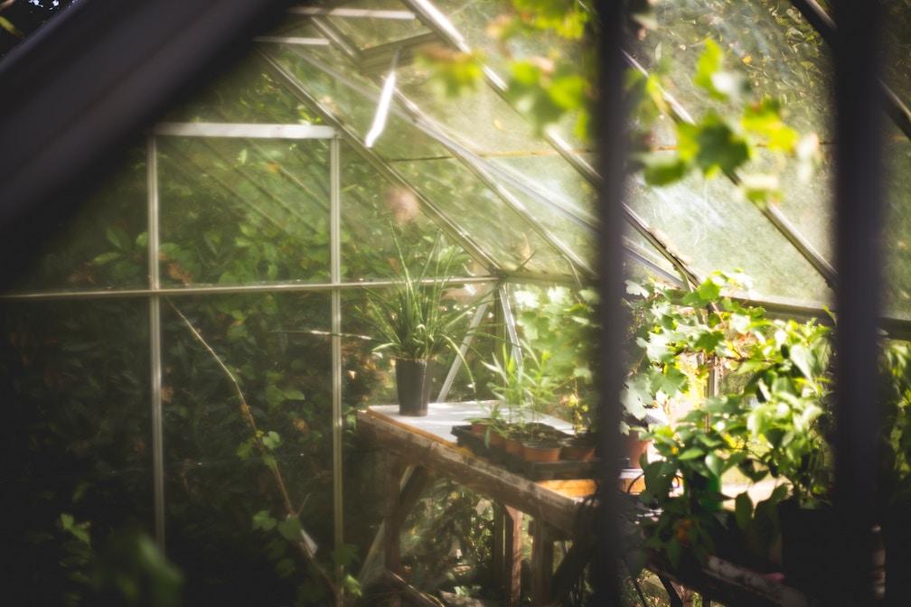 greenhouse from unsplash.jpg