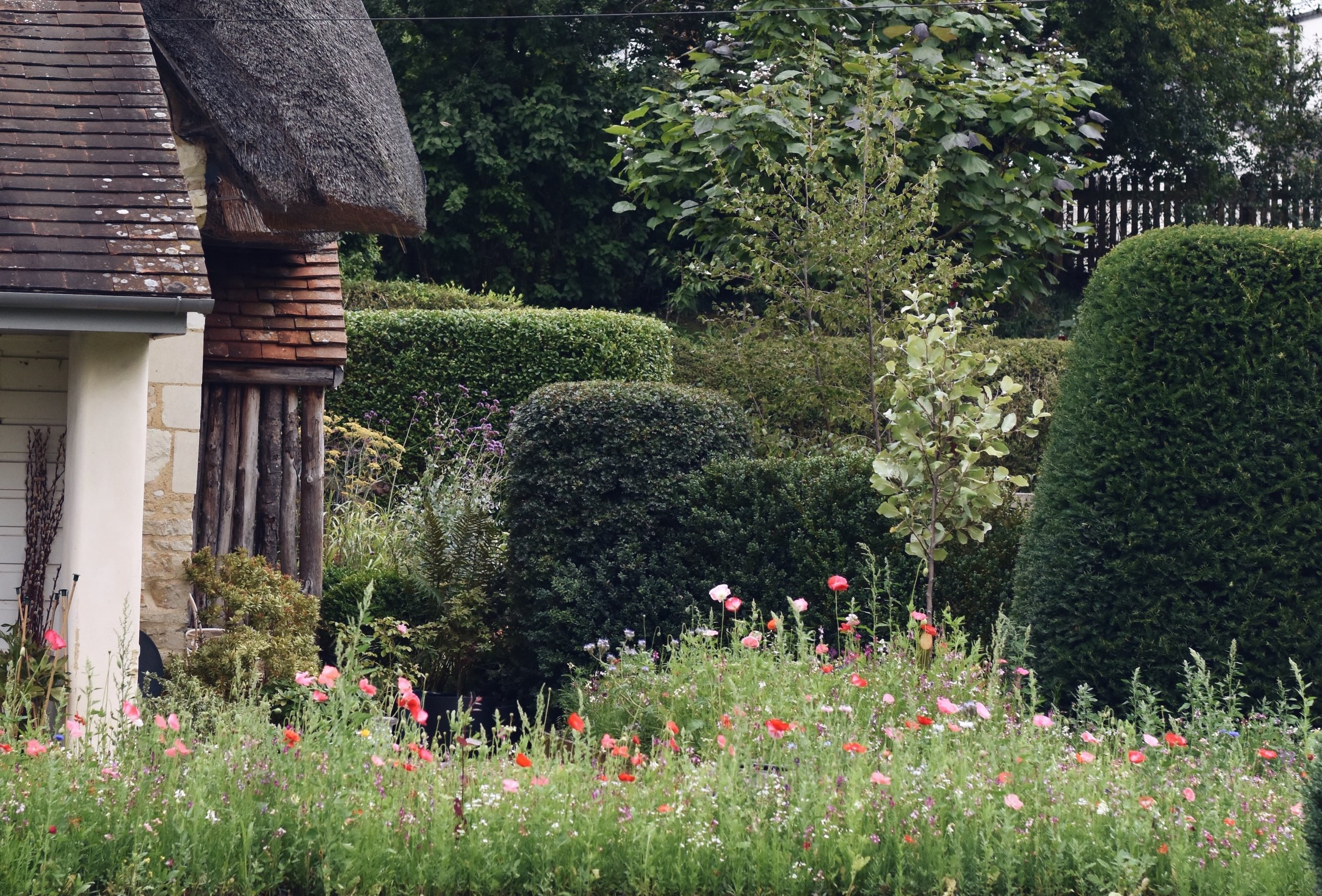 The new meadow shows in relief against the topiary we're keeping.