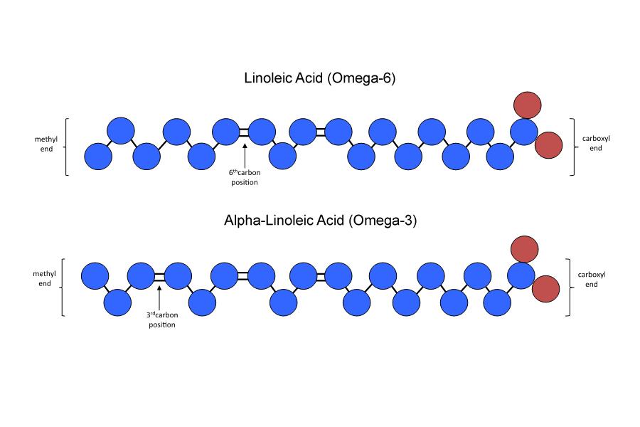 fatty acid chains.jpg