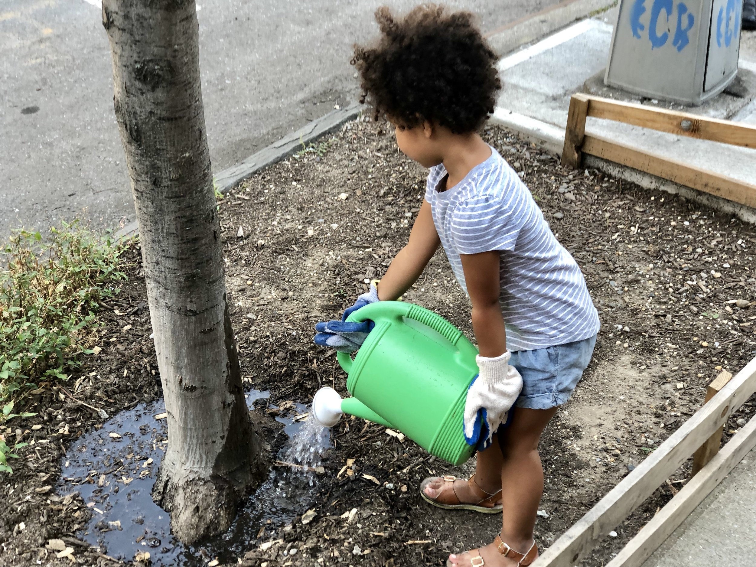 6 Three year old water a tree.jpg