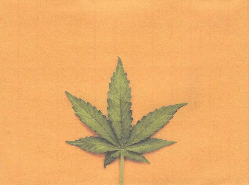 4 Marijuana plant.jpg