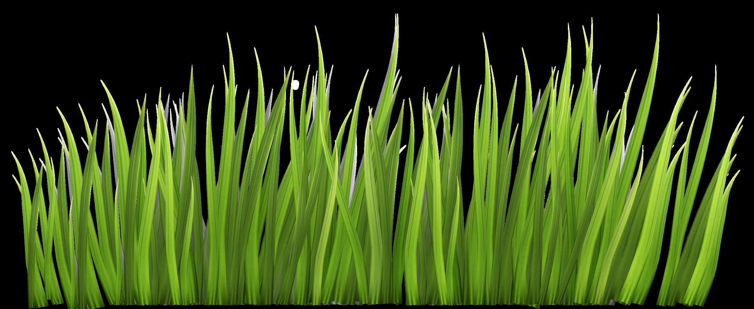 grass-blades-2.png