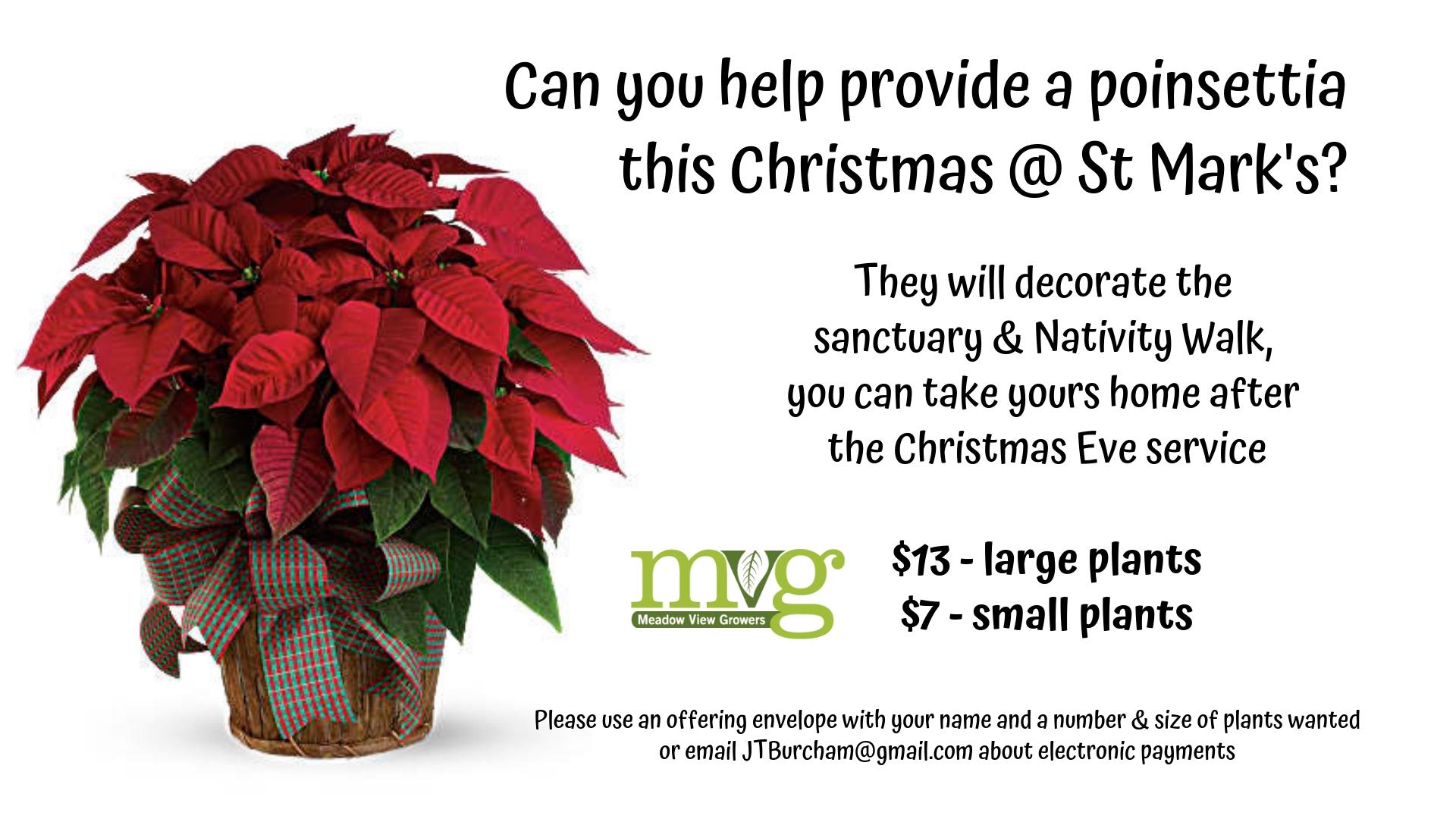 181209-Poinsettias @ St Mark's this Christmas .jpg