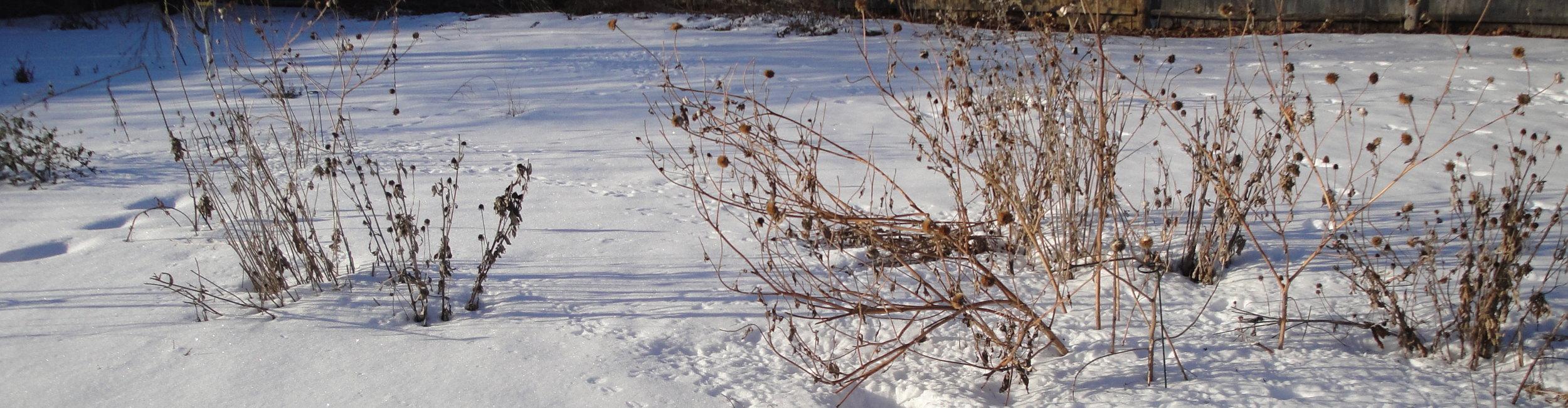 dead-flowers-winter.jpg