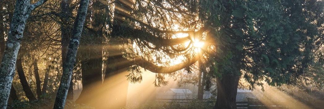 light-of-sunshine.jpg