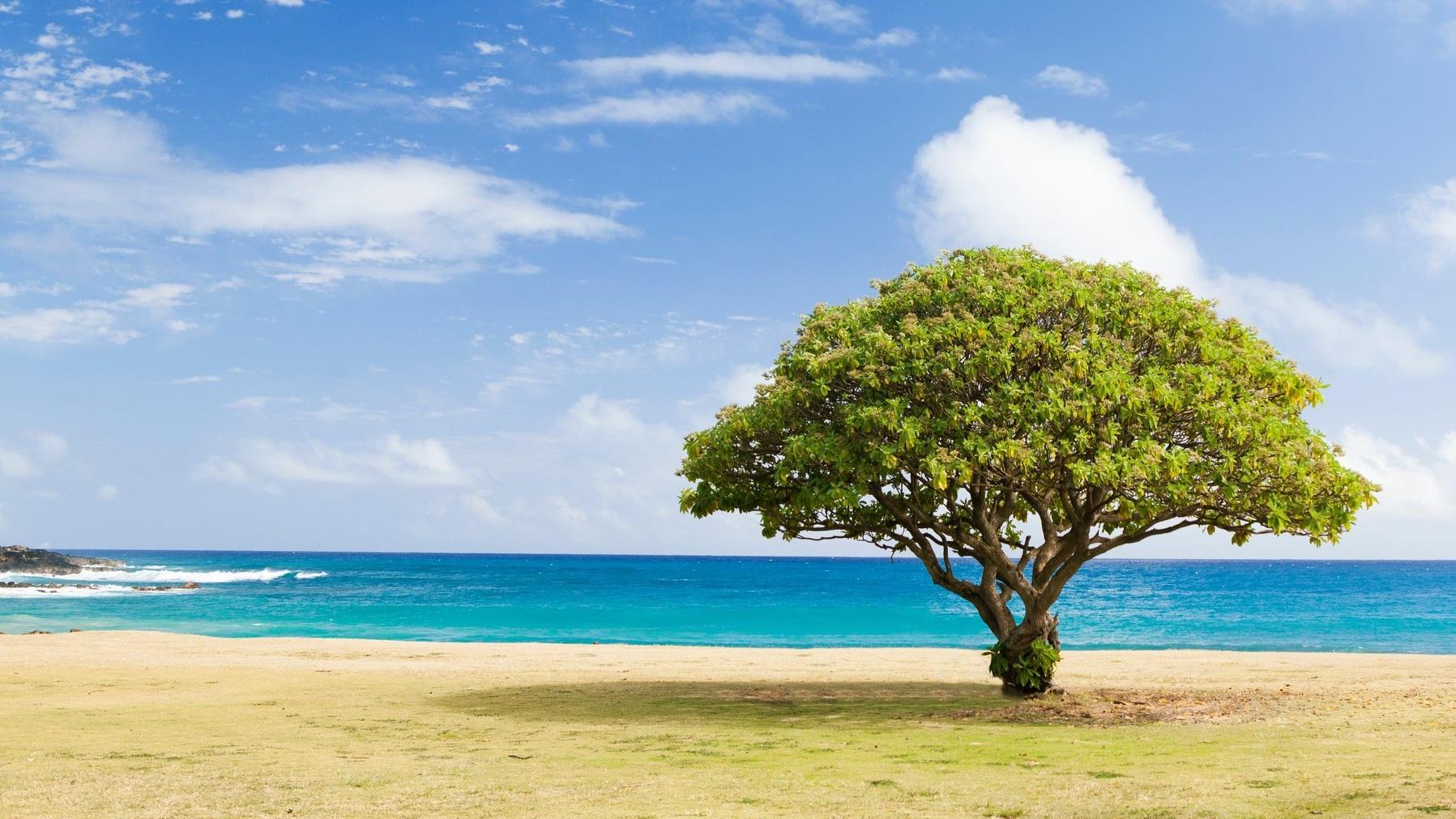 peaceful-beach-todd-quackenbush-77495-unsplash.jpg