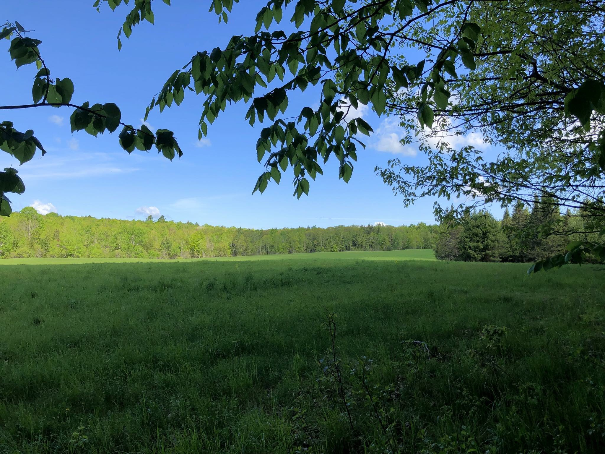 hayland