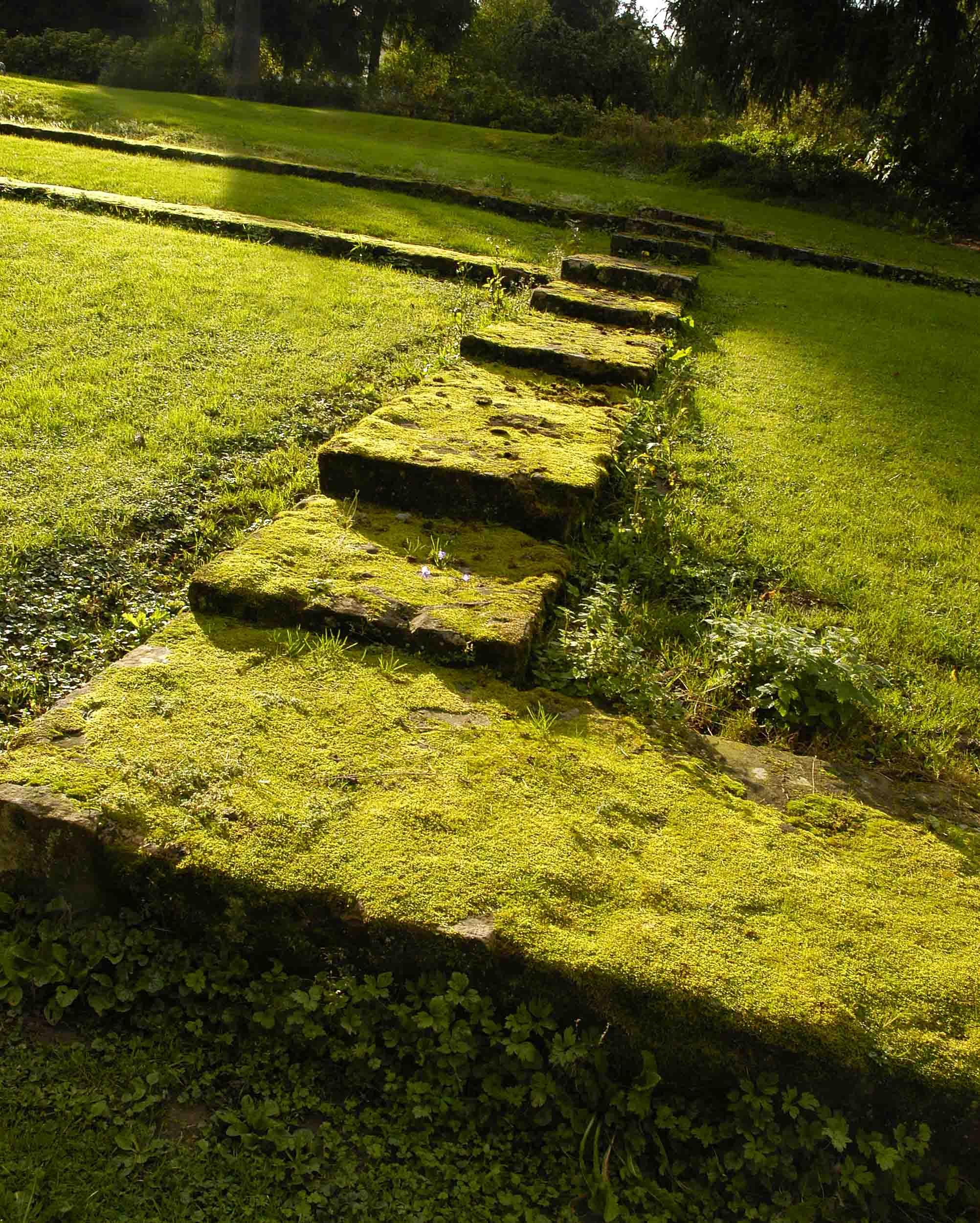 Green Steps cropped.jpg