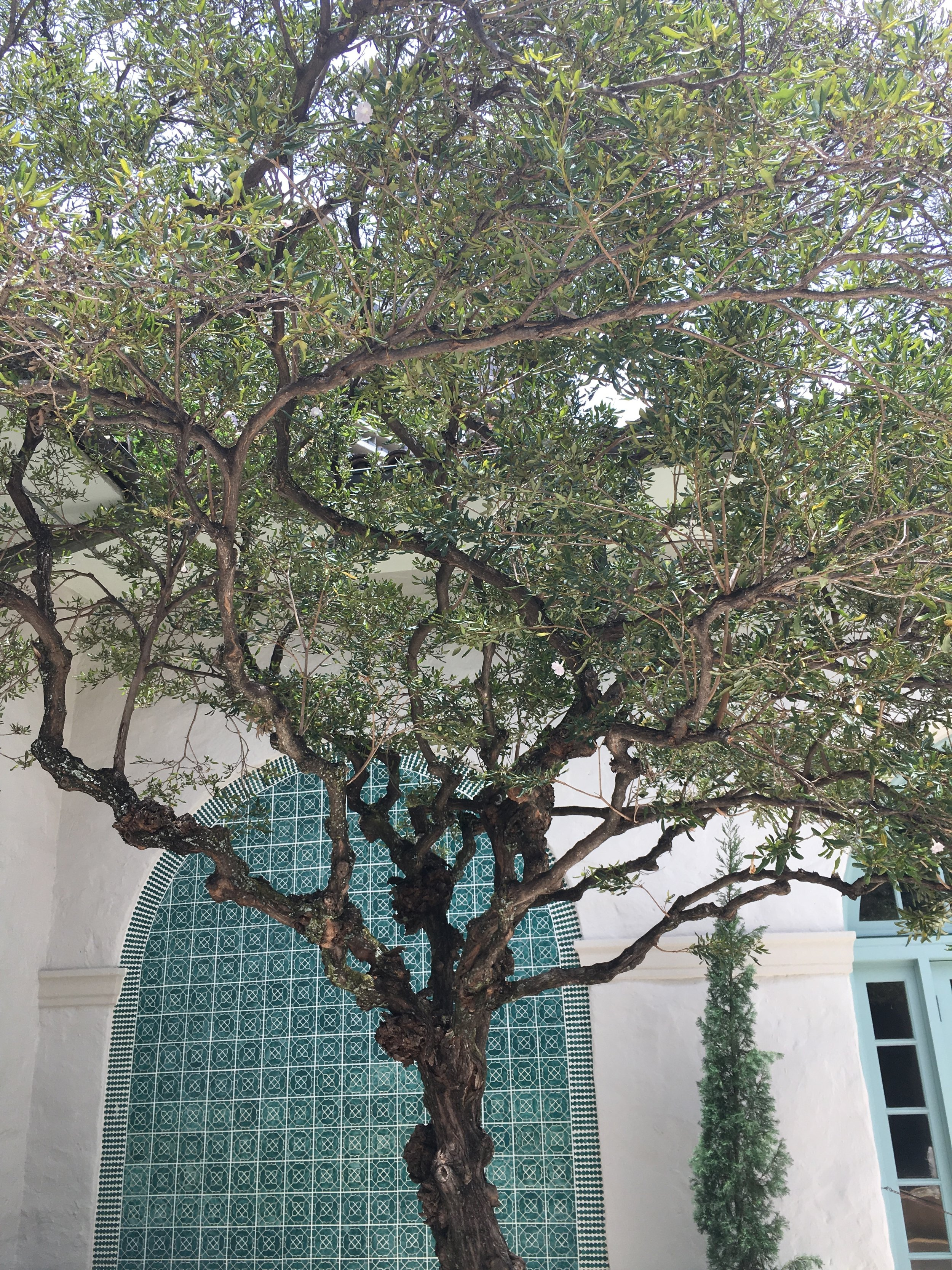 Lena Khalaf Tuffaha Love Song for the Last of the Tall Trees.JPG