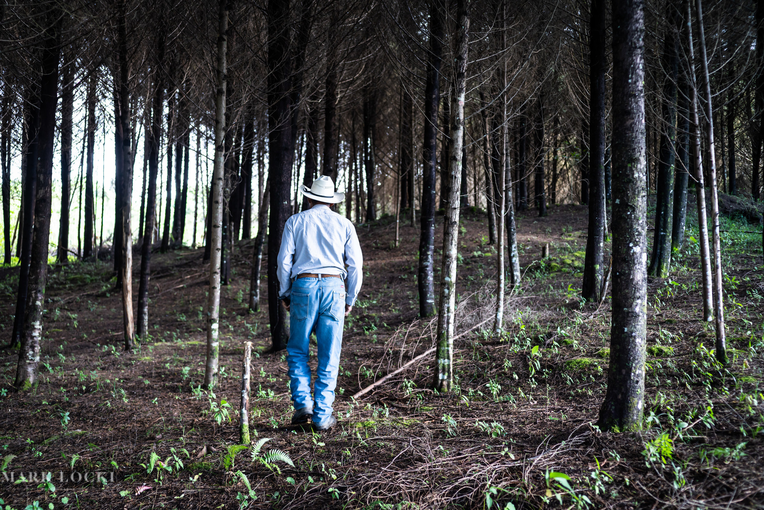 A man walks through a forest outside of Tziscao, Chiapas, Mexico